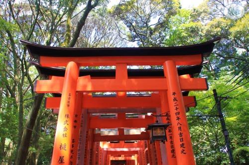 Santuario Fushimi Inari 3