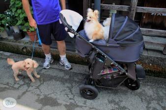 perros-carrito